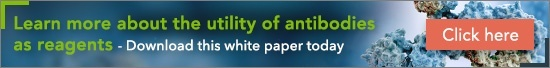 Learn more about the utility of antibodies as reagents - download this white paper today