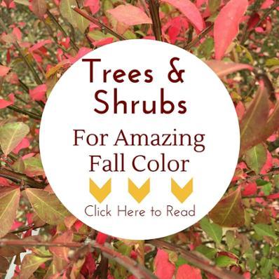 plantingtreesandshrubswithgreatfallcolor
