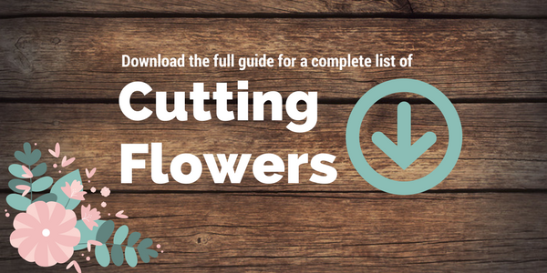 planning a flower garden