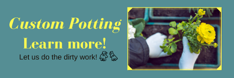 click here to learn more about custom potting.