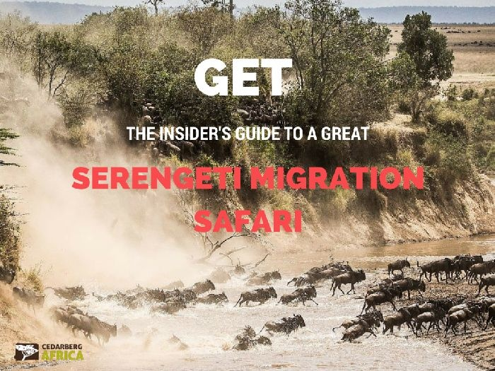 Get the Insider's Guide to a Great Serengeti Migration Safari