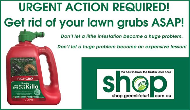 Kill lawn grub infestations with Richgro Lawn Beetle & Grub Killa