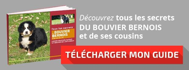 """Télécharger mon guide : """"Les secrets du Bouvier Bernois"""""""