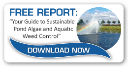 Guide To Sustainable Pond Algaes & Aquatic Weed Control