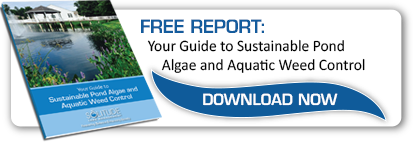 Guide To Sustainable Pond Algae & Aquatic Weed Control