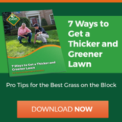 Tips to get a thicker and greener lawn in Cincinnati, Dayton, OH, or N. Kentucky