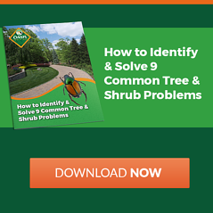 Tree and shrub problems in Cincinnati, Dayton, OH, and N. Kentucky
