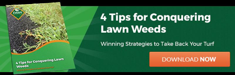 Tips to get rid of weeds in Cincinnati, Dayton, OH, or N. Kentucky