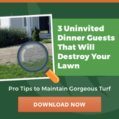 Learn about lawn insects in Cincinnati, Dayton, OH, and N. Kentucky