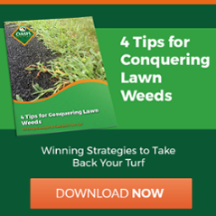 Tips to get rid of weeds in Cincinnati, Dayton, OH, or N. Kentucky