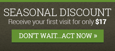 Seasonal Discount | Best Greening Services