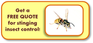 stinging insect free quote