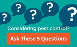 Questions to ask if you are looking for pest control.