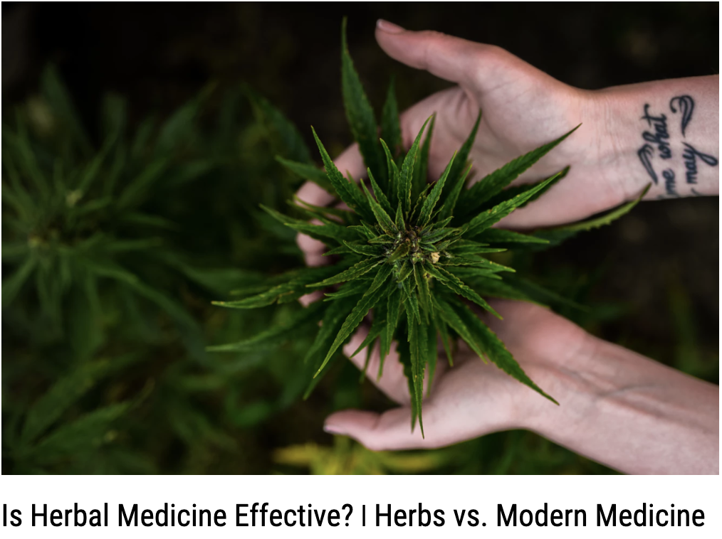 Is Herbal Medicine Effective? | Herbs vs. Pharmaceuticals