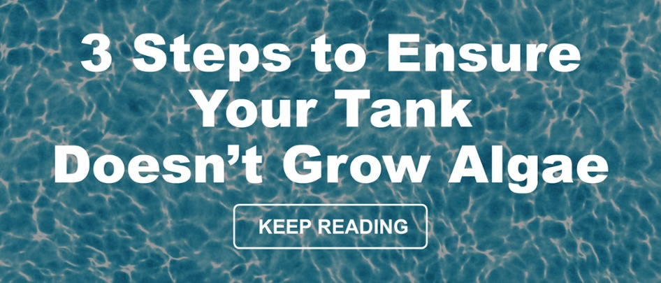 3 Steps to Ensure Your Tank Doesn't Grow Algae