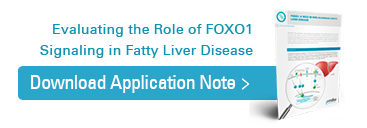 Download Fox01 application note