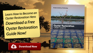 indian river lagoon oyster restoration guide