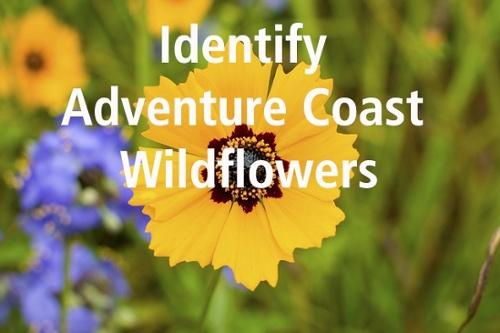FL Wildflower ID