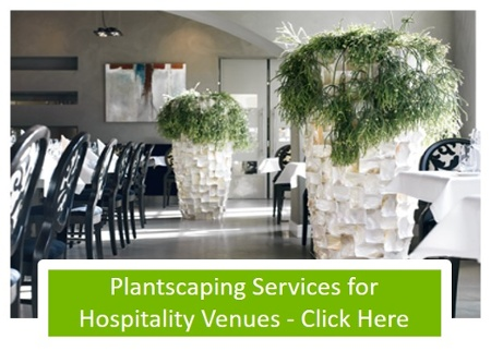 Click here to visit our Hospitality Plantscaping Site