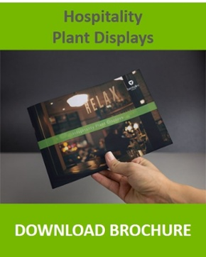 Click here to download brochure on plant displays for hotels, restaurants, pubs and cafes