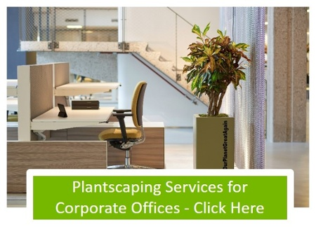 Click here to visit our Corporate Office Plantscaping Site