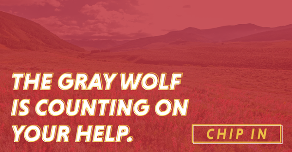 Chip-In: The Gray Wolf is Counting on Your Help