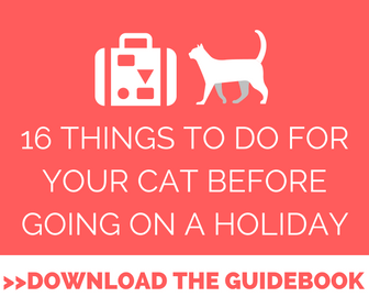 How to leave a cat alone while on vacation
