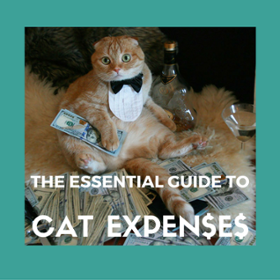 cat ownership expenses