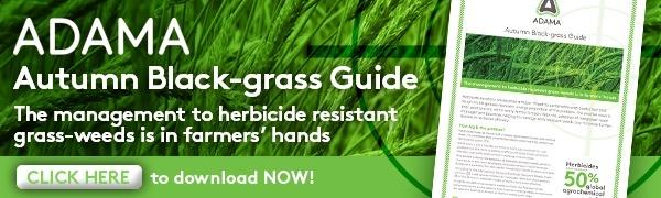 Autumn black-grass guide