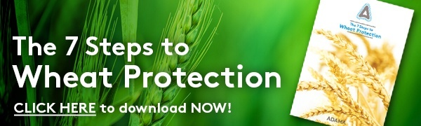 The 7 Steps to Wheat Protection Guide