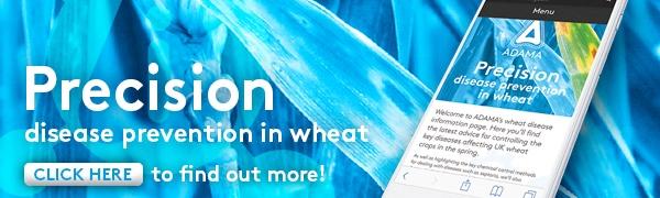 Precision Disease Prevention in Wheat