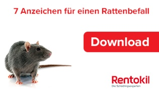 7 Anzeichen für einen Rattenbefall!