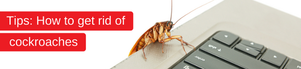 Tips on how to get rid of cockroaches from the Rentokil Pest Control Experts in South Africa