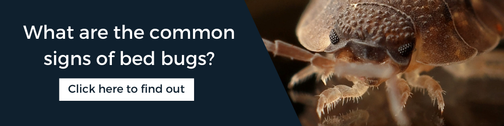 Common signs of bed bugs: Advice from Rentokil Pest Control Experts