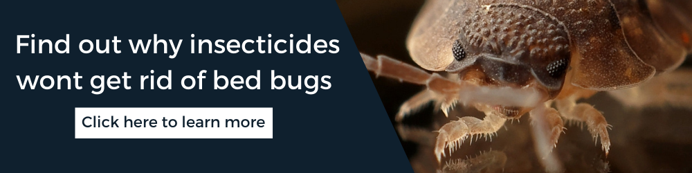 Insecticides wont get rid of bed bugs: Find out what will with advice from Rentokil Pest Control Experts