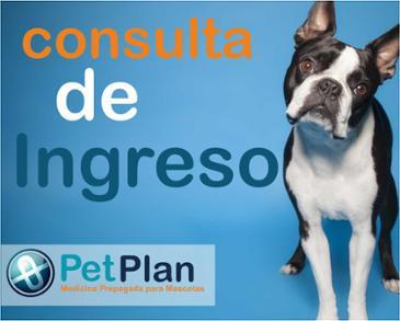 CONSULTA DE INGRESO