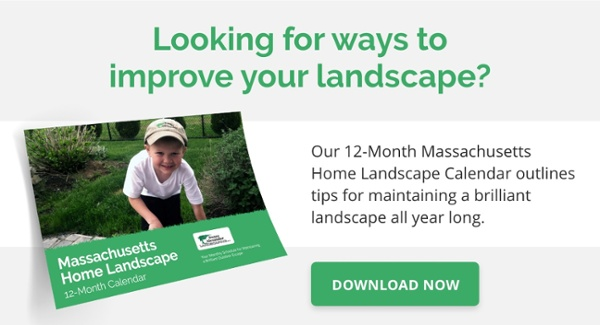 Swazy and Alexander Landscaping