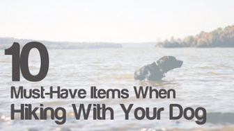 10 must haves when hiking with your dog