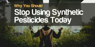 why you should stop using synthetic pesticides