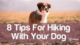 8 tips for hiking with your dog