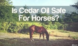 is cedar oil safe for horses