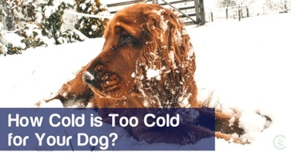 Cedarcide Blog Post Image, How Cold is Too Cold for Your Dog
