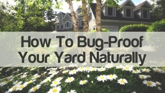how to bug proof your yard naturally