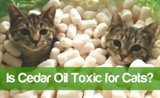 is cedar oil safe for cats