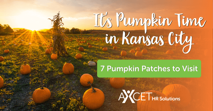 seven pumpkin patches to visit in the kansas city metro in 2020