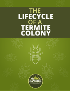 The Lifecycle of a Termite Colony