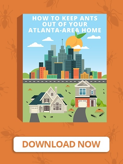 How To Keep Ants Out Of Your Atlanta Area Home