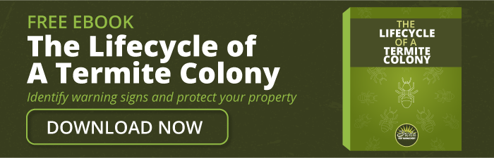 Free Ebook: The Lifecycle of A Termite Colony - Identify warning signs and protect your property.