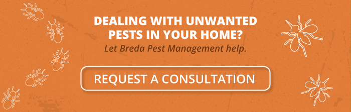 Dealing with unwanted pests in your home? Let Breda Pest Management help. Request a consultation.