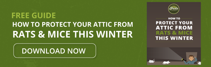 How to Protect Your Attic From Rats & Mice This Winter